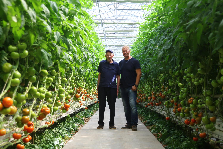 """""""Šjora Pomidora"""" iz Sv. Filipa i Jakova osvaja Dalmaciju: """"Potražnja za našim rajčicama daleko premašuje proizvodnju"""""""