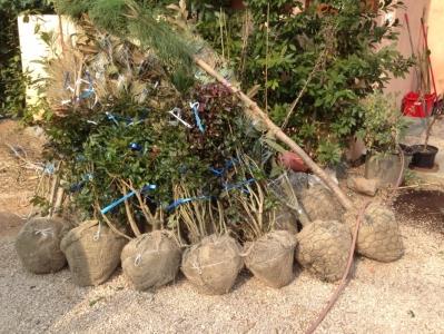 U Turnju i Sv. Filip i Jakov-u nova stabla umjesto uništenih