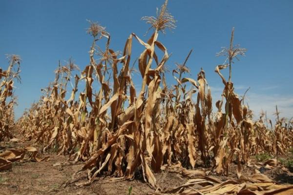 Mole se građani da prijave eventualnu štetu na poljoprivrednim kulturama