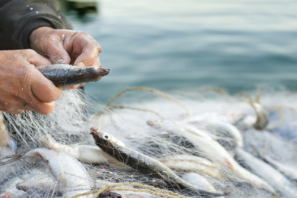 """Poziv na radionicu za korisnike mjere IV.3. """"Stavljanje na tržište proizvoda ribarstva i akvakulture"""" i mjeru """"Produktivna ulaganja u akvakulturu"""" u Biogradu na Moru"""